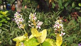 Cámara lenta de pequeñas flores blancas hermosas cerca del cuadrado de ciudad de Surabaya metrajes