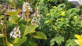 Cámara lenta de pequeñas flores blancas hermosas cerca del cuadrado de ciudad de Surabaya almacen de video