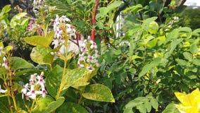 Cámara lenta de pequeñas flores blancas hermosas cerca del cuadrado de ciudad de Surabaya almacen de metraje de vídeo