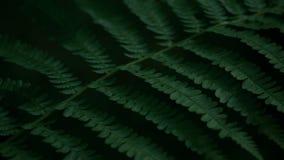 Cámara lenta del helecho de la planta verde, tiro oscuro, un color verde rico profundo metrajes