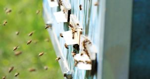 Cámara lenta del vuelo de Honey Bee alrededor de la colmena con el fondo borroso apicultura almacen de video