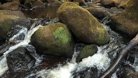 Cámara lenta estupenda de un pequeño watefall de la corriente del bosque sobre rocas cubiertas de musgo en el distrito máximo, Re almacen de video