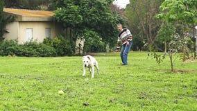 Cámara lenta estupenda de un perro blanco que coge una pelota de tenis almacen de metraje de vídeo