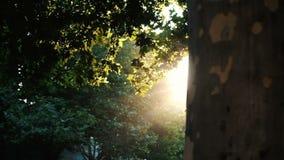 Cámara lenta - las hojas en la rama brillan intensamente en los rayos de la puesta del sol La luz del sol mira furtivamente hacia almacen de video