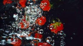 Cámara lenta Pocos tomates rojos mojados frescos sabrosos con el hundimiento descendente de las colas verdes en agua almacen de metraje de vídeo