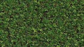 Cámara lenta por el lado derecho de la hierba salvaje con las porciones de semilla de trébol almacen de video