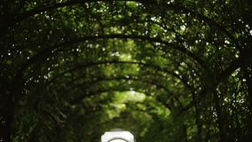 Cámara morphing del movimiento del pasillo del jardín botánico metrajes