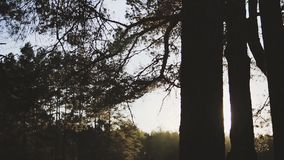 Cámara que se mueve adelante a través de los árboles y de las ramas en bosque almacen de metraje de vídeo