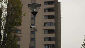 Cámaras de vigilancia delante del bloque de apartamentos almacen de metraje de vídeo