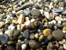 Cáncer del ‹del †del ‹del †del mar en la playa Foto de archivo libre de regalías