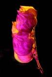 Cápsula de la semilla en la luz ambarina y magenta Fotografía de archivo libre de regalías