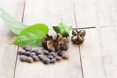 A cápsula secada semeia o fruto do amendoim de Sacha Inchi Fotos de Stock