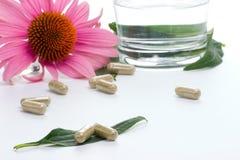 Cápsulas del Echinacea Fotografía de archivo libre de regalías