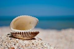 Cáscara abierta hermosa blanca grande en la izquierda en un fondo del día soleado azul del verano del arena de mar Imágenes de archivo libres de regalías