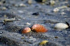 Cáscara colorida del mar en orilla de mar Fotos de archivo