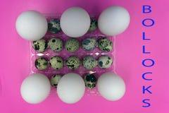 Cáscara cruda orgánica sana de los huevos del pollo y de codornices, fotos de archivo libres de regalías
