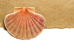 Cáscara de concha de peregrino en la arena imagen de archivo