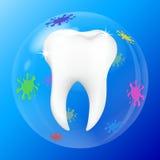 Cáscara de diente Imagen de archivo