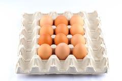 Cáscara de huevo Fotografía de archivo libre de regalías