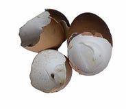 Cáscara de huevo Foto de archivo