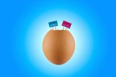 Cáscara de huevo, clip Imágenes de archivo libres de regalías