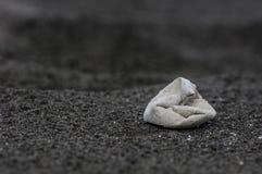Cáscara de huevo de la tortuga de mar imagenes de archivo