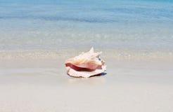 Cáscara de la concha en la playa de la arena con el mar fotografía de archivo