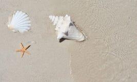 Cáscara de la concha en la playa de la arena con el mar fotos de archivo