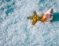 Cáscara de las estrellas de mar y del caracol en la nieve IR Fotos de archivo libres de regalías