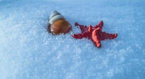 Cáscara de las estrellas de mar y del caracol en nieve Imagen de archivo libre de regalías