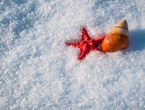 Cáscara de las estrellas de mar y del caracol en nieve Fotos de archivo libres de regalías