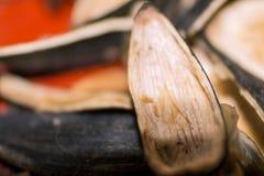 Cáscara de las semillas de girasol en macro en la tabla Fotos de archivo libres de regalías