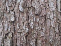 Cáscara de madera del árbol viejo Fotografía de archivo libre de regalías
