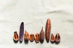 Cáscara de madera en harpillera imagen de archivo