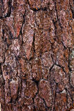 Cáscara del árbol Imagen de archivo