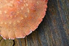 Cáscara del cangrejo en roca imagenes de archivo