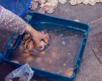 Cáscara del caracol con los crustáceos Foto de archivo libre de regalías