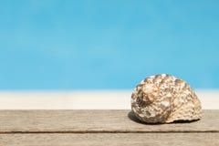 Cáscara del caracol de mar Fotos de archivo libres de regalías