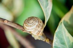 Cáscara del caracol en las hojas Imagenes de archivo