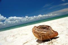 Cáscara del coco Imágenes de archivo libres de regalías