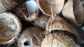 Cáscara del coco Foto de archivo libre de regalías