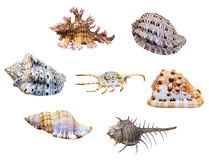 Cáscara del grupo del caracol de mar Foto de archivo libre de regalías