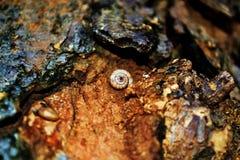 Cáscara del insecto Fotos de archivo