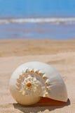 Cáscara del mar Imágenes de archivo libres de regalías
