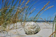 Cáscara del mar Fotografía de archivo libre de regalías