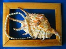 Cáscara del mar con las perlas de agua dulce en un marco Fotografía de archivo