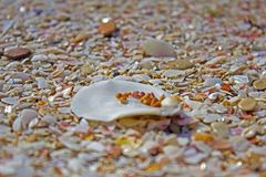 Cáscara del mar en la playa en la playa fotografía de archivo
