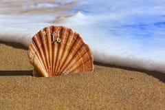 Cáscara del mar en la playa de Algarve Fotografía de archivo