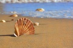 Cáscara del mar en la playa de Algarve Imagen de archivo libre de regalías