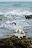 Cáscara del mar en la playa de Nuan fotos de archivo